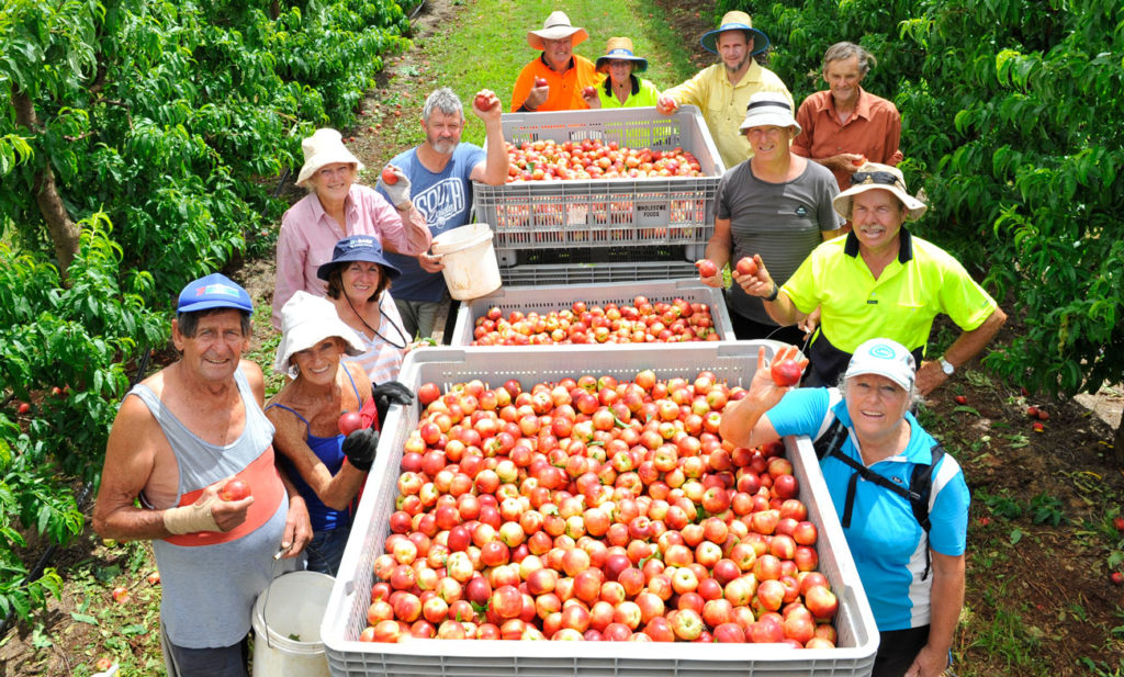 stone fruit growers and the wrath of the pandemic